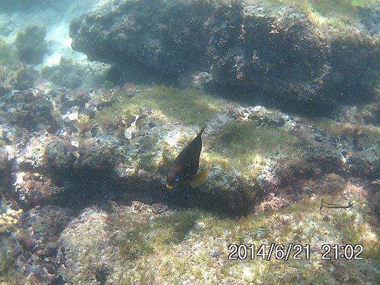 Puerto Villamil, Ekuador: peixes