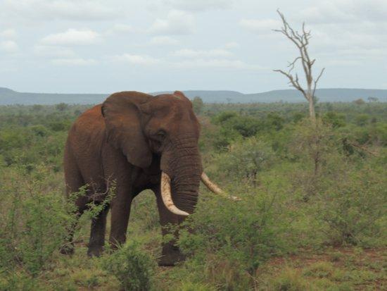 Marloth Park, South Africa: Safári (Kruger Park)