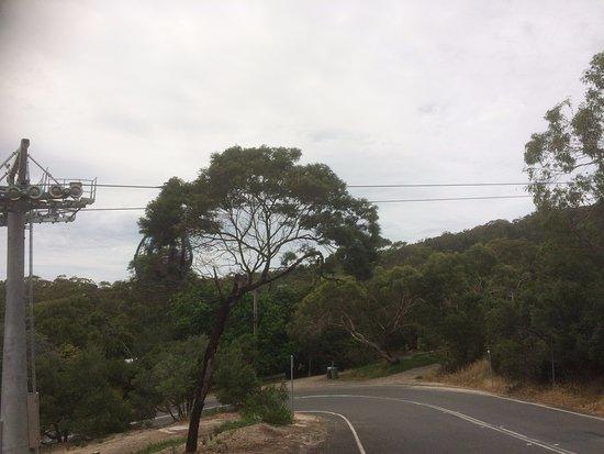 Arthurs Seat, Australia: The Road Down