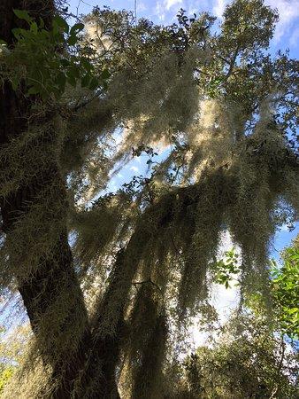 Bokeelia, FL: photo3.jpg