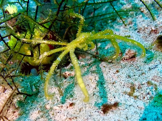 Pulau Weh, Indonesia: Orangutang crab