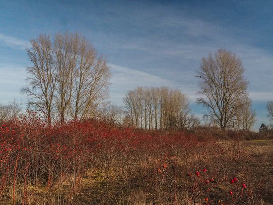 Tsawwassen, Canadá: Rose hips and trees