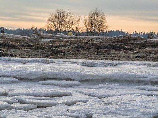 Centennial Beach: Foreshore covered in ice
