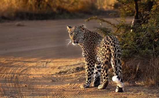 Awesome one-day Pilanesberg safari!! - Review of South
