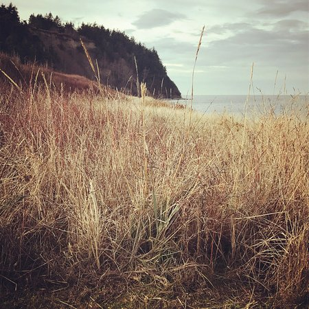 Port Townsend, WA: Fort Worden beach grass