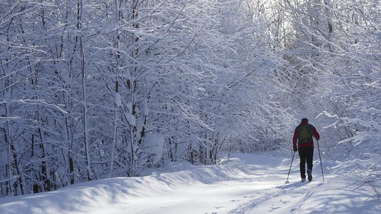 Stokely Creek Lodge: classic and skate groomed