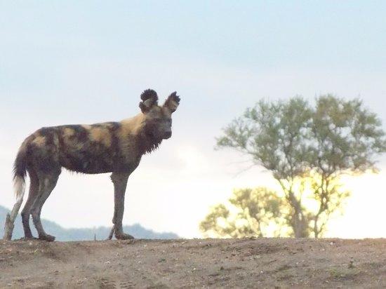 Mosetlha Bush Camp & Eco Lodge: Sundowner after the hunt