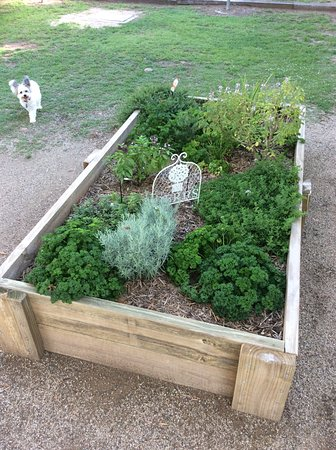 Monto, Australia: Our herb garden appreciated the rain too! Millie agrees 🐶