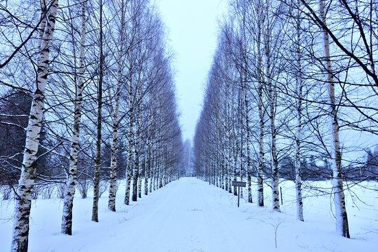Savonlinna, Finlandia: Road to Lomamokkla