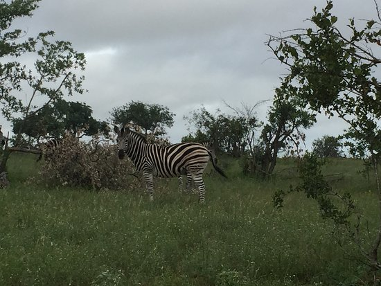 Klaserie Private Game Reserve, South Africa: photo7.jpg