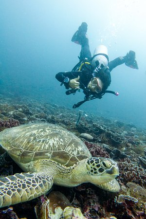 Gili Air, Indonesia: saying hello to mr turtle