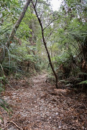 Northland Region, New Zealand: trail road