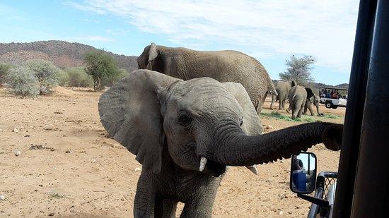 Omaruru, Namibia: Feeding the elephants