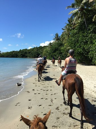 Cape Tribulation, Australia: photo4.jpg