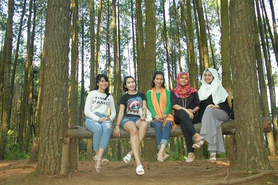 Imogiri Pine Forest Rencanakan Wisata Kehutan Pinus