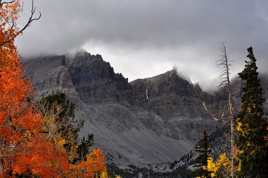 Great Basin National Park, NV: Amazing stark contrast of colourful trees and grey mountainside.