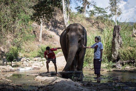 Mae Chaem, Thailand: Elephant Bath
