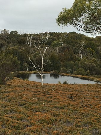 Cradle Mountain-Lake St. Clair National Park, Australia: Natures Carpet at Cradle Mountain