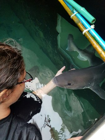 Моссель-Бей, Южная Африка: Special moment between me and Bean, one of our two female Smooth Hound sharks that you can swim