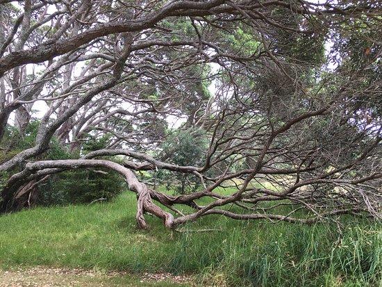 Waiuku, New Zealand: Awhitu Regional Park