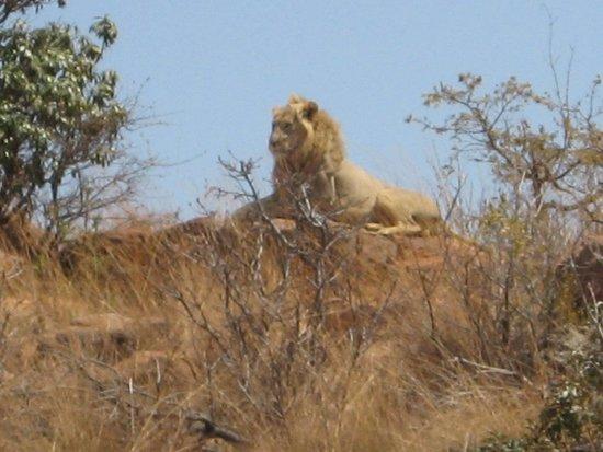 Welgevonden Game Reserve, Güney Afrika: Wildlife