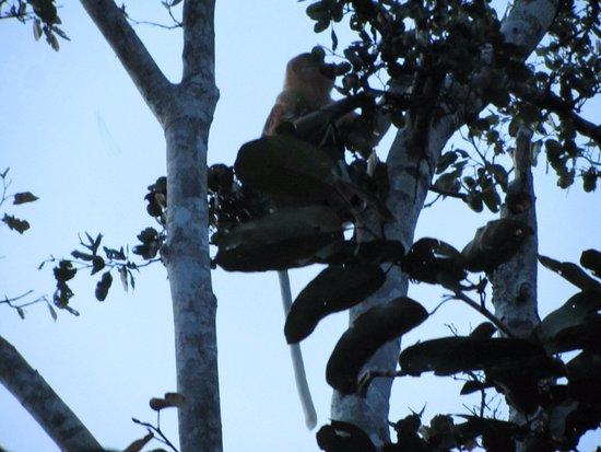 Weston Wetland Park: 17 Proboscis