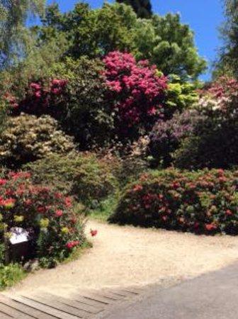 Olinda, Australia: Jalan yang dipenuhi bunga-bunga