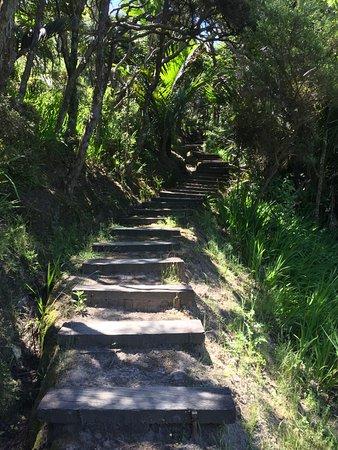 Гисборн, Новая Зеландия: Scalini di legno
