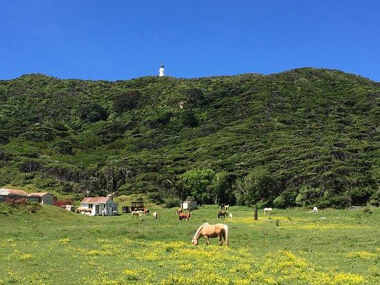 Gisborne, Nuova Zelanda: Da sotto