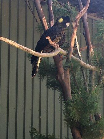 Seddon, Australia: photo4.jpg
