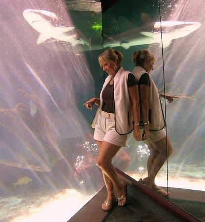 Hamilton, Bermudy: fun day at the Bermuda Aquarium.!!