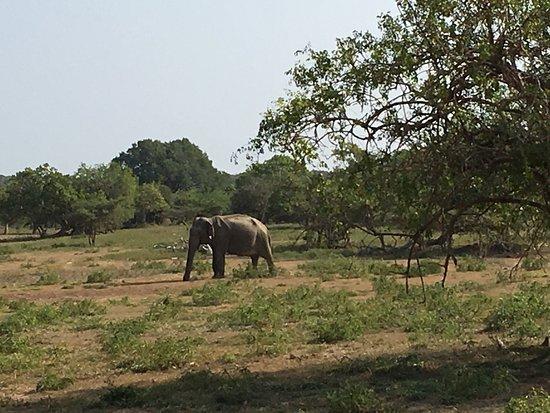 Tissamaharama, Sri Lanka: Yala National Park