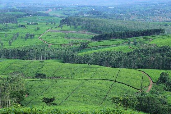 Malawi: Tea Estates of Shire Highlands