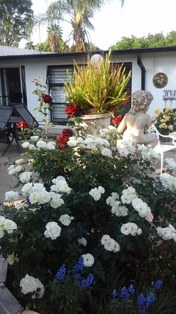 Centurion, South Africa: Roses in the Garden