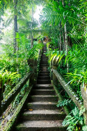 Mena Creek, Australia: 公園內第一個蓋好的就是這座樓梯。因為城堡建在較高的地方,所以必須先蓋好樓梯,才能把建材一一往上運輸。照片可能看不清楚,樓梯中間和最上方分別有三個牌子,是這幾十年來因為水災侵襲所淹沒的高度...