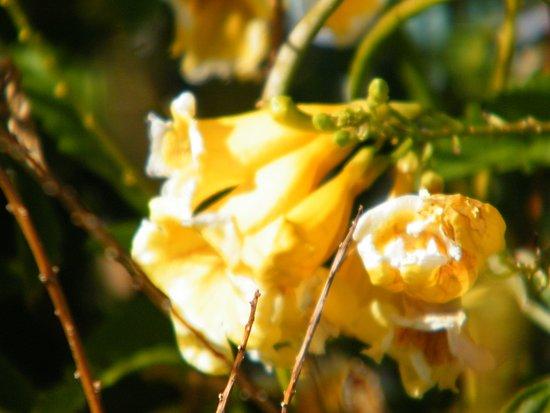 Gila Bend, AZ: flowers by the pool : o )