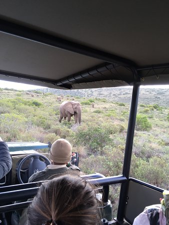 Amakhala Game Reserve, Afrika Selatan: photo3.jpg