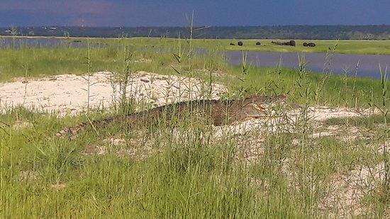Kasane, Botswana: Крокодил