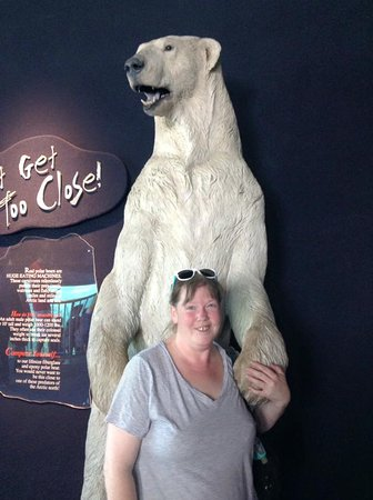 Toledo, OH: Seeing the arctic life