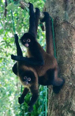 Puerto Jimenez, Kostaryka: Goofballs!