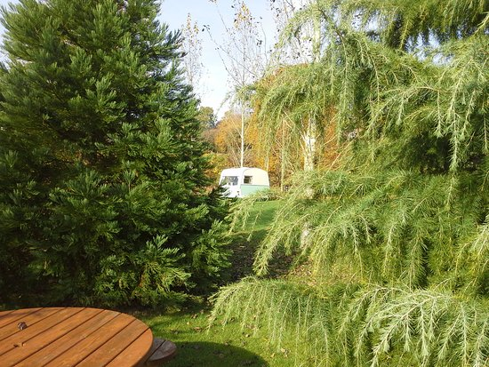 Craven Arms, UK: Vintage caravan through the trees. On a top grass electric hook up pitch