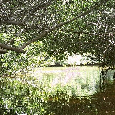Kralendijk, Bonaire: De mooie mangrove Bonaire