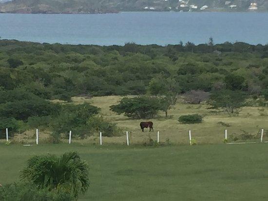 New Castle, Nevis: Lots of land
