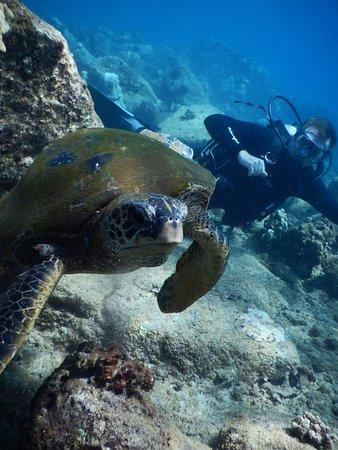 โคเลา, ฮาวาย: Tortugas everywhere.