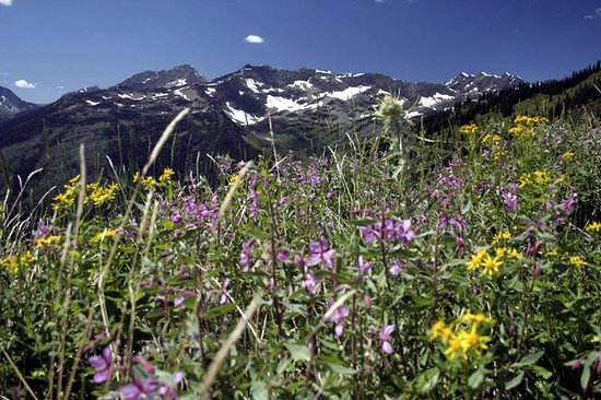 Kaslo, Canada: Mountains wildflowers in July.
