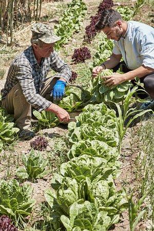 Milopotas, Grekland: Organic garden