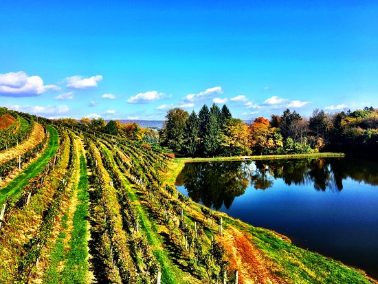 New Tripoli, PA: Fall at the vineyard