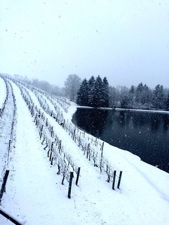 Blue Mountain Vineyards: Winter at the vineyard