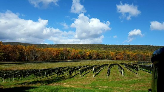 Blue Mountain Vineyards: Our Leaser Lake Vineyard - historical property