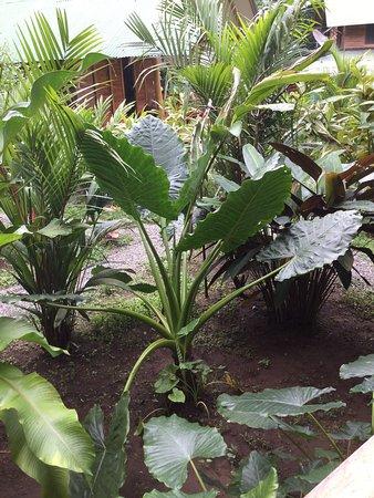 Cocles, Costa Rica: Precioso el jardín tropical del hotel